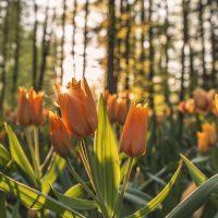 ¡Es tiempo de florecer!