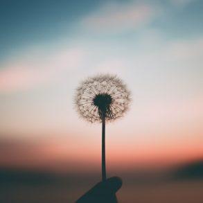 Busca y encuentra paz